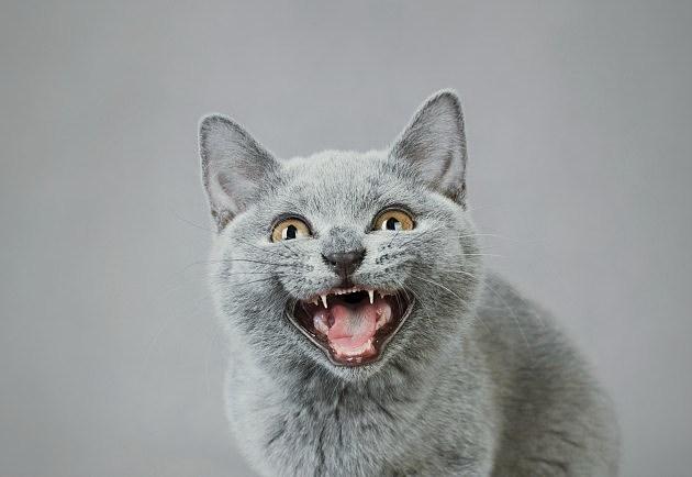 Internet Cat Video Film Festival Coming To Boise
